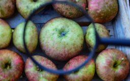 Quels sont les fruits qui font mûrir les autres ?
